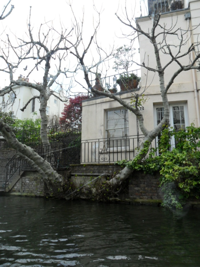 Trees on Regent's Canal