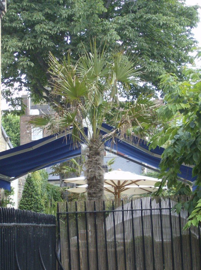 Greenwich Palm Tree