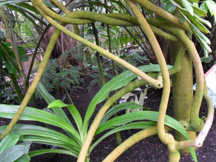Kew Tree