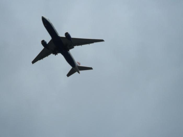 Plane at Kew