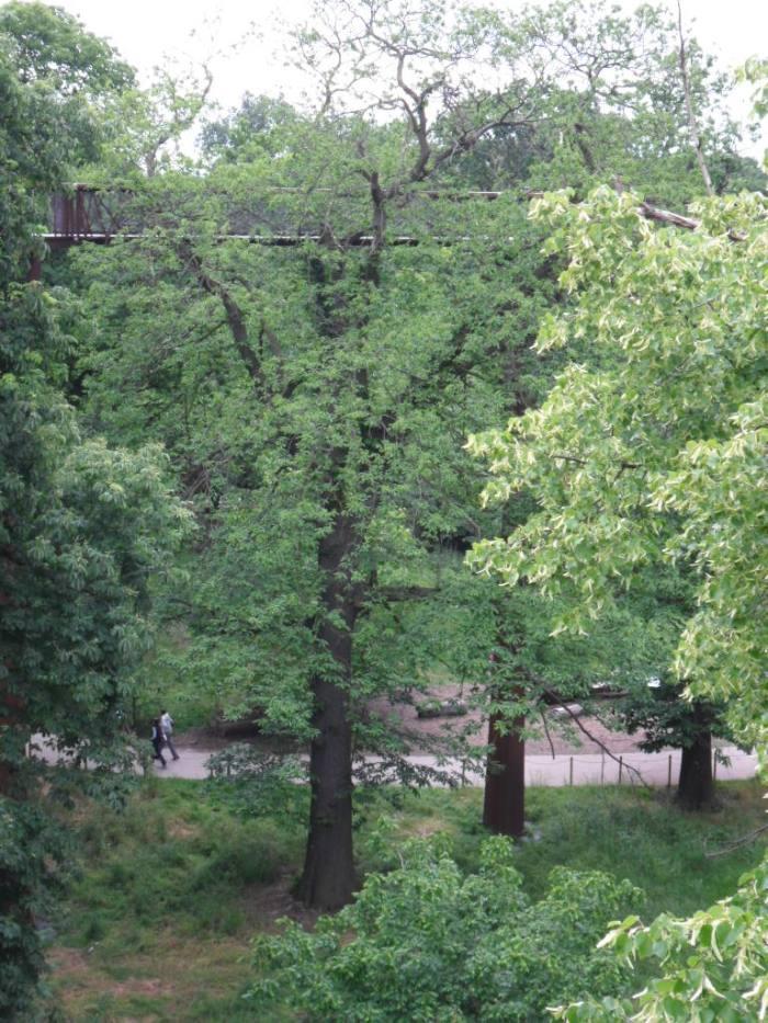 Kew Treetop Walk