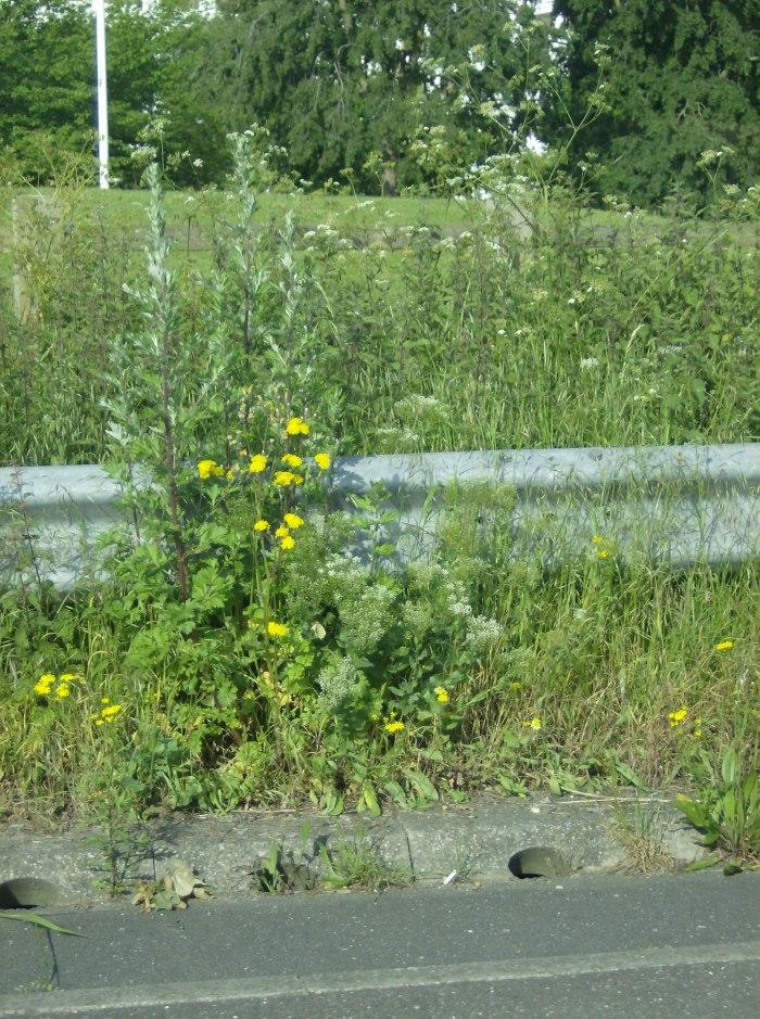LHR Weeds