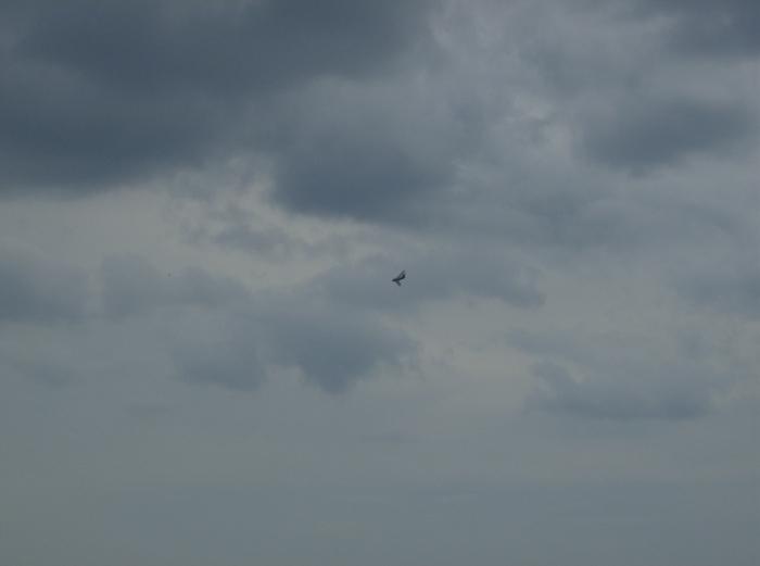 MiG-17 Fresco CIAS